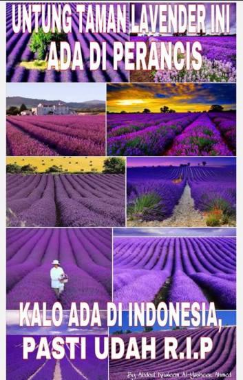 Download Kumpulan Meme Rusaknya Bunga Amalyris ini Bikin Ngakak Guling \u2013 Guling Sob